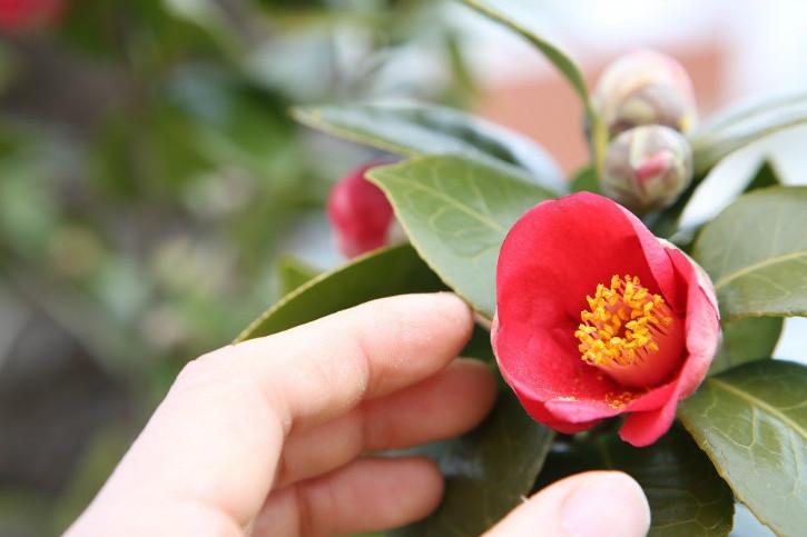 flowers-726532_960_720.jpg